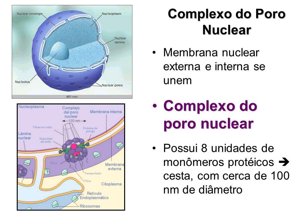 Complexo do Poro Nuclear Membrana nuclear externa e interna se unem Complexo do poro nuclearComplexo do poro nuclear Possui 8 unidades de monômeros pr