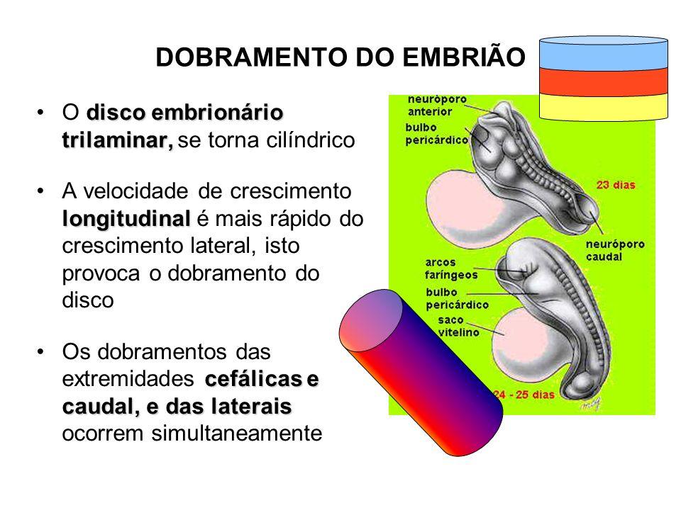Período fetal Até a 30 a semana o feto tem aparência avermelhada e enrugada com pele fina Nas últimas seis a oito semanas forma a gordura, dando a aparência lisa e rechonchuda ao feto