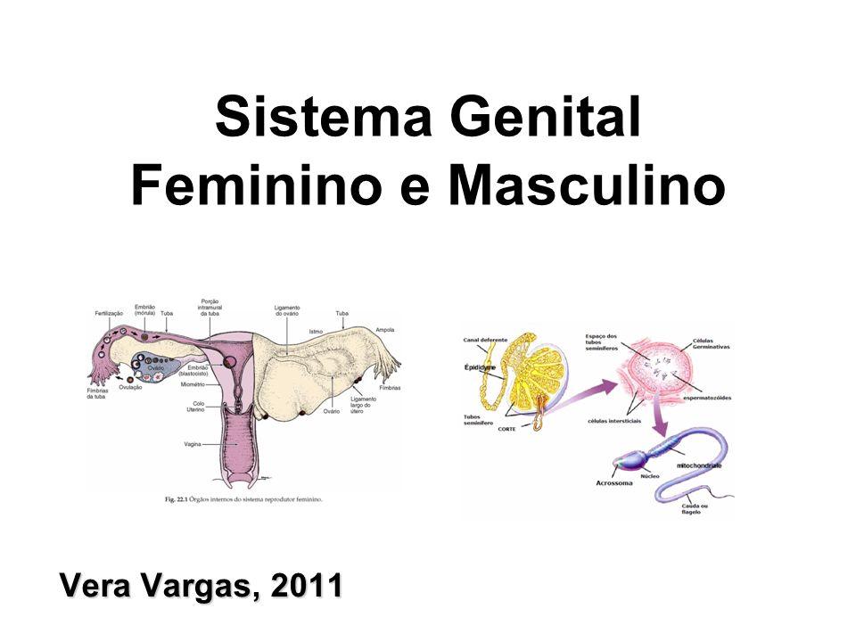 Vera Vargas, 2011 Sistema Genital Feminino e Masculino