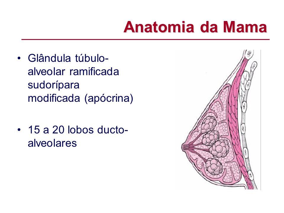 Anatomia da Mama Glândula túbulo- alveolar ramificada sudorípara modificada (apócrina) 15 a 20 lobos ducto- alveolares