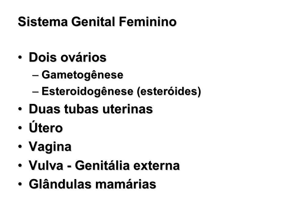 Sistema Genital Feminino Dois ováriosDois ovários –Gametogênese –Esteroidogênese (esteróides) Duas tubas uterinasDuas tubas uterinas ÚteroÚtero Vagina