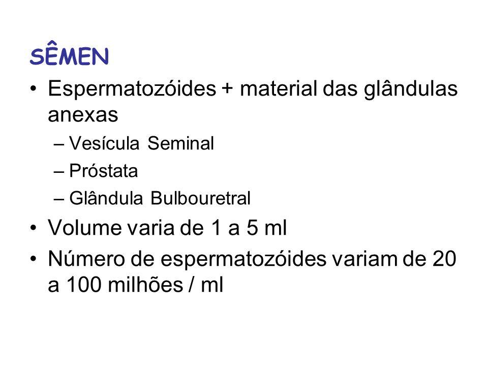 SÊMEN Espermatozóides + material das glândulas anexas –Vesícula Seminal –Próstata –Glândula Bulbouretral Volume varia de 1 a 5 ml Número de espermatoz