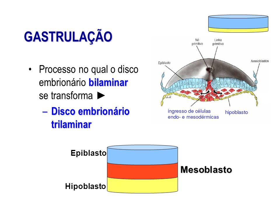 GASTRULAÇÃO bilaminarProcesso no qual o disco embrionário bilaminar se transforma – Disco embrionário trilaminar Epiblasto Hipoblasto Mesoblasto