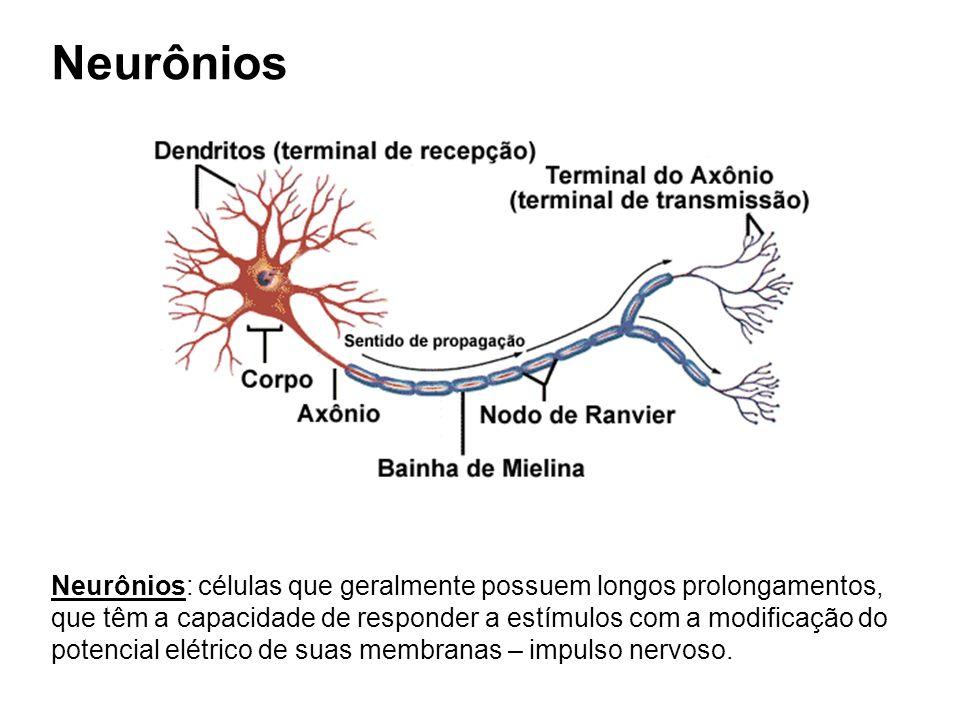 Neurônios Neurônios: células que geralmente possuem longos prolongamentos, que têm a capacidade de responder a estímulos com a modificação do potencia