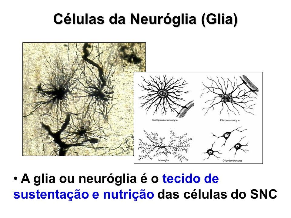 Células da Neuróglia (Glia) A glia ou neuróglia é o tecido de sustentação e nutrição das células do SNC