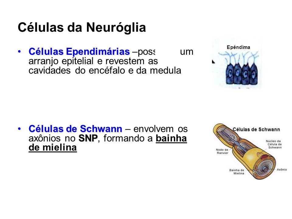 Células da Neuróglia Células EpendimáriasCélulas Ependimárias –possuem um arranjo epitelial e revestem as cavidades do encéfalo e da medula Células de