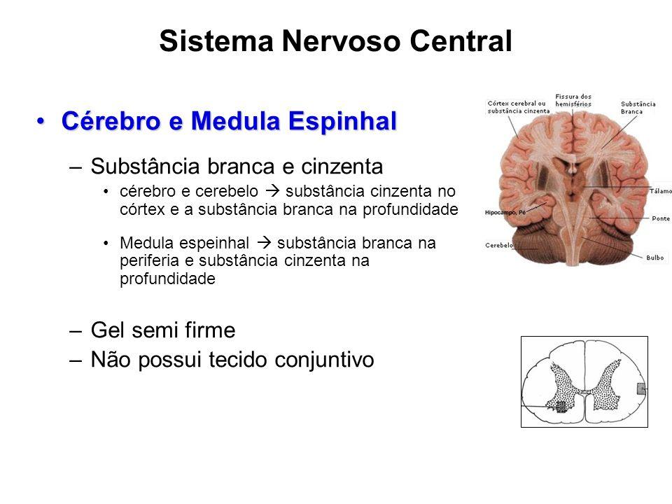 Sistema Nervoso Central Cérebro e Medula EspinhalCérebro e Medula Espinhal –Substância branca e cinzenta cérebro e cerebelo substância cinzenta no cór
