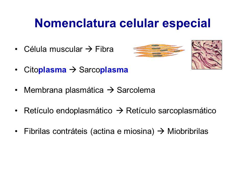 Nomenclatura celular especial Célula muscular Fibra Citoplasma Sarcoplasma Membrana plasmática Sarcolema Retículo endoplasmático Retículo sarcoplasmát