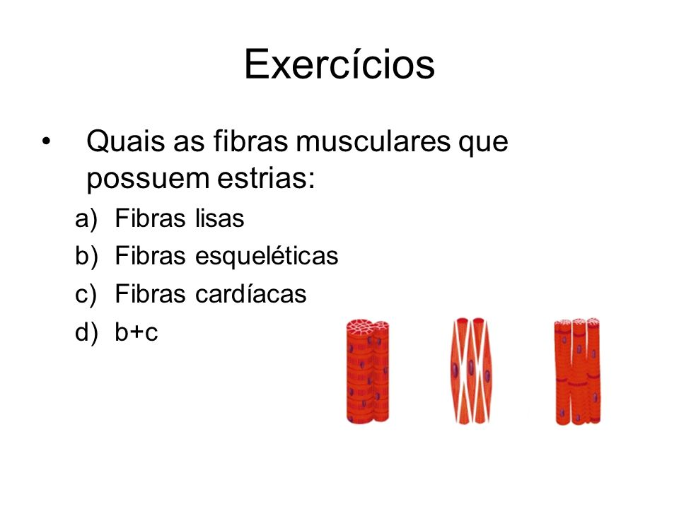 Exercícios Quais as fibras musculares que possuem estrias: a)Fibras lisas b)Fibras esqueléticas c)Fibras cardíacas d)b+c