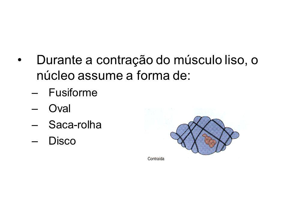 Durante a contração do músculo liso, o núcleo assume a forma de: –Fusiforme –Oval –Saca-rolha –Disco