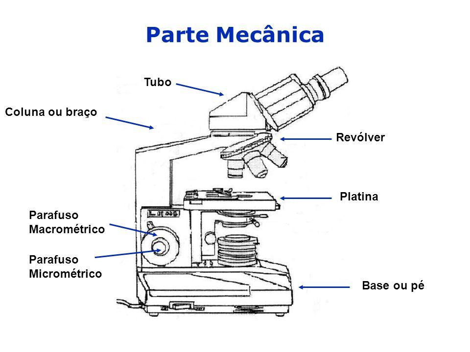 Parte Mecânica Base ou pé Coluna ou braço Tubo Revólver Platina Parafuso Macrométrico Parafuso Micrométrico