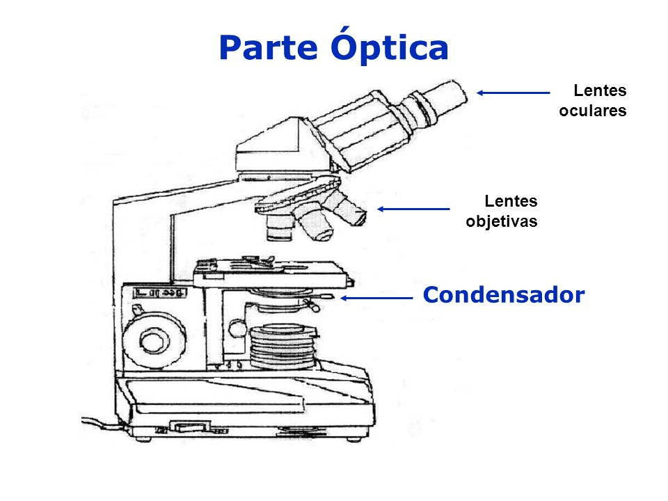 Parte Óptica Condensador Lentes objetivas Lentes oculares