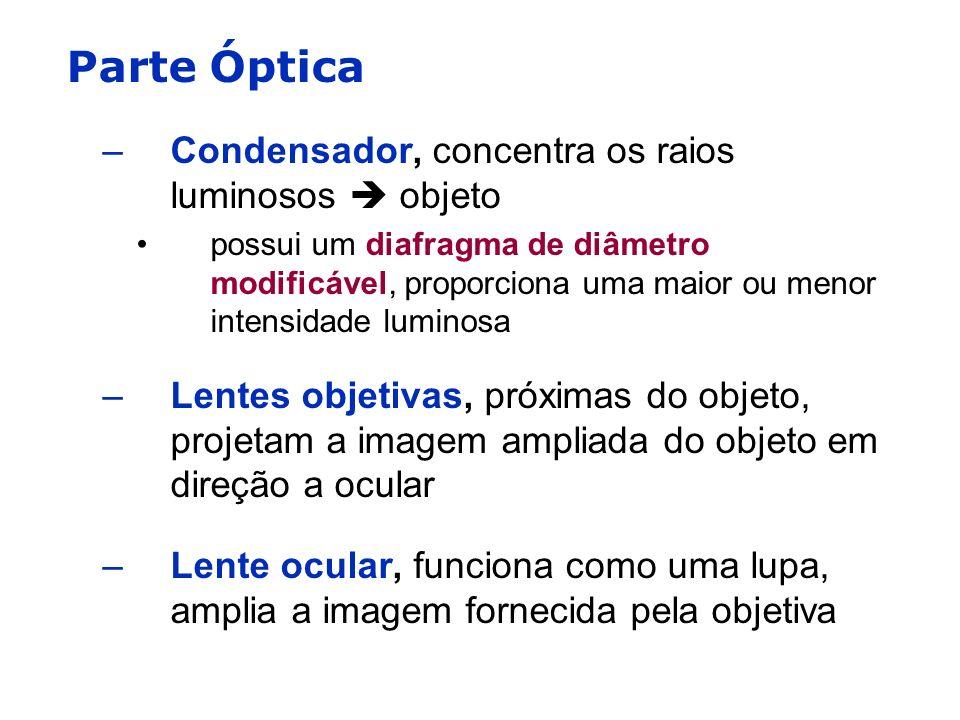 Parte Óptica –Condensador, concentra os raios luminosos objeto possui um diafragma de diâmetro modificável, proporciona uma maior ou menor intensidade