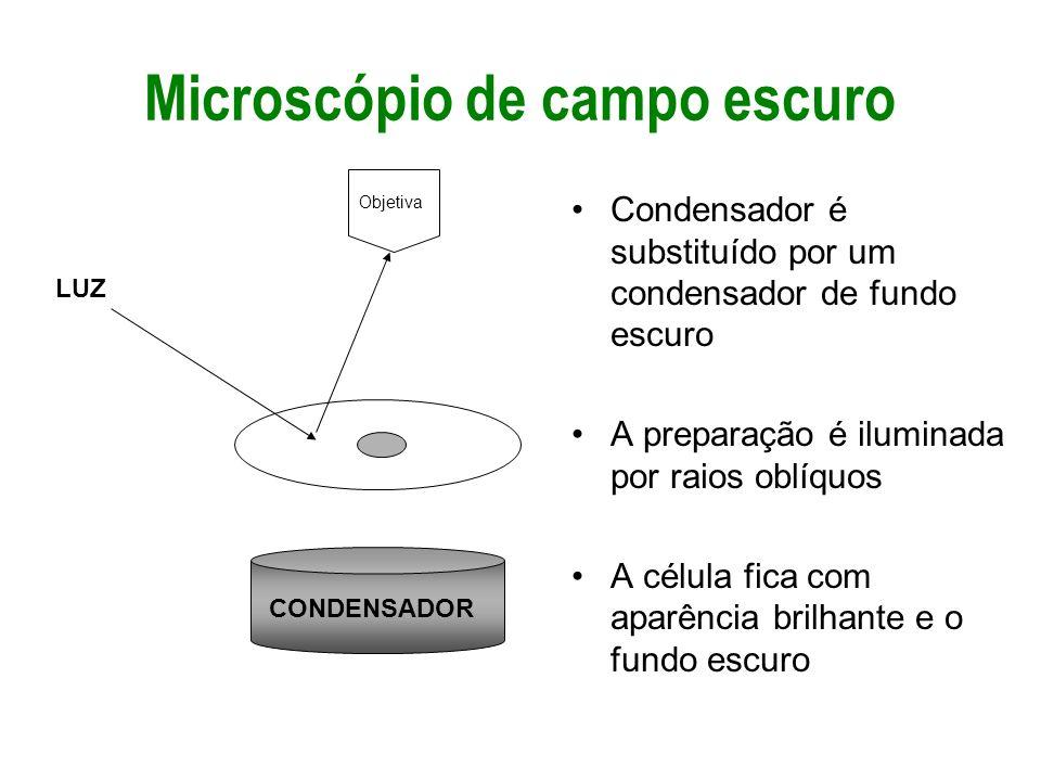 Microscópio de campo escuro Condensador é substituído por um condensador de fundo escuro A preparação é iluminada por raios oblíquos A célula fica com