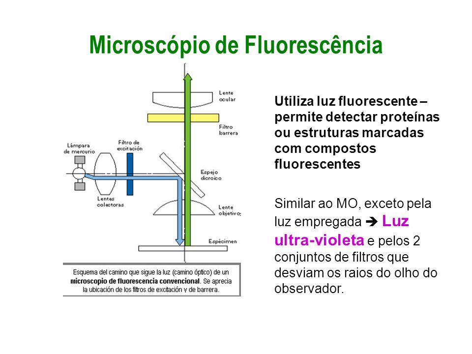 Microscópio de Fluorescência Utiliza luz fluorescente – permite detectar proteínas ou estruturas marcadas com compostos fluorescentes Similar ao MO, e