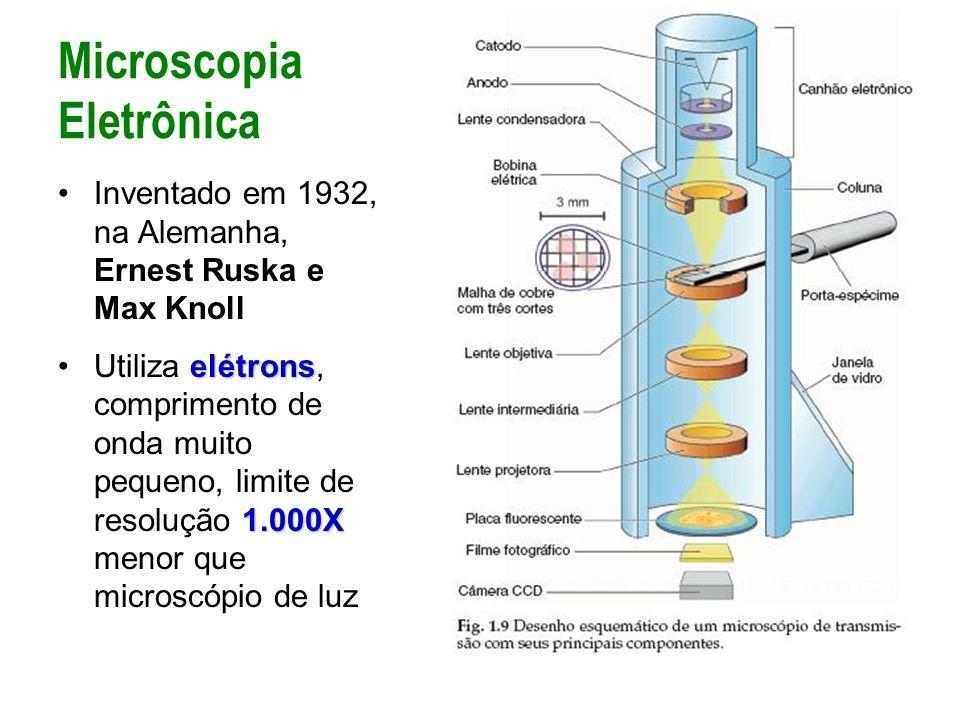 Inventado em 1932, na Alemanha, Ernest Ruska e Max Knoll elétrons 1.000XUtiliza elétrons, comprimento de onda muito pequeno, limite de resolução 1.000