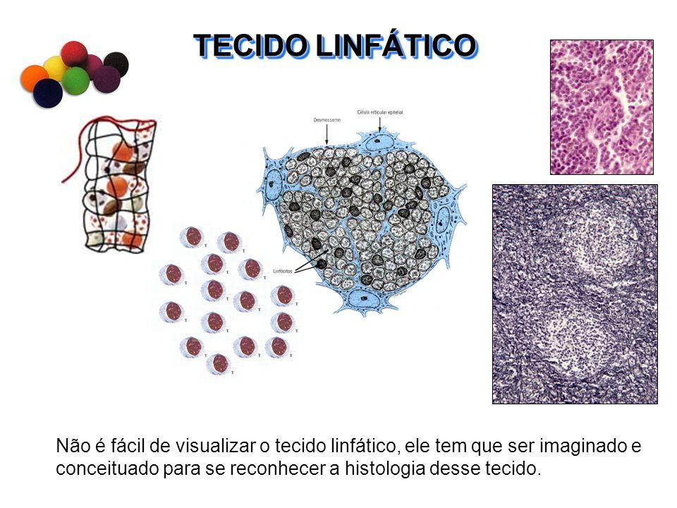 IntestinoTonsilas