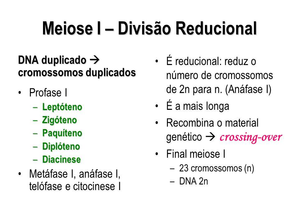 Meiose I – Divisão Reducional DNA duplicado cromossomos duplicados Profase I – Leptóteno – Zigóteno – Paquíteno – Diplóteno – Diacinese Metáfase I, an
