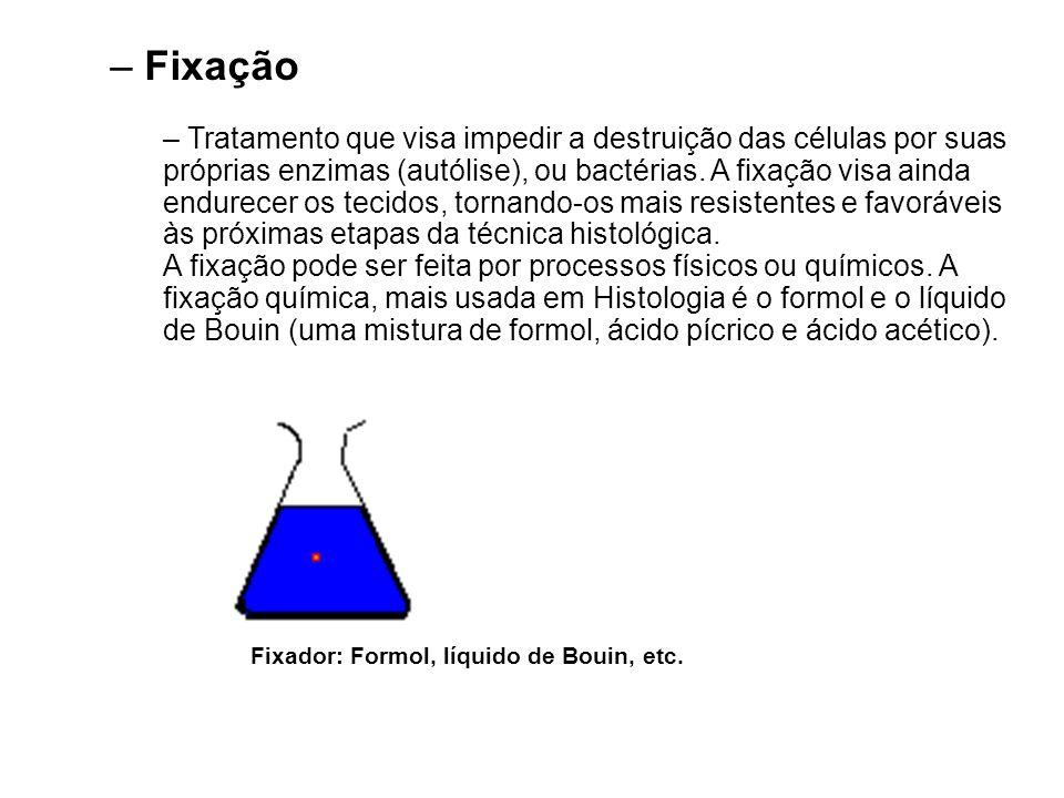 – Fixação – Tratamento que visa impedir a destruição das células por suas próprias enzimas (autólise), ou bactérias. A fixação visa ainda endurecer os