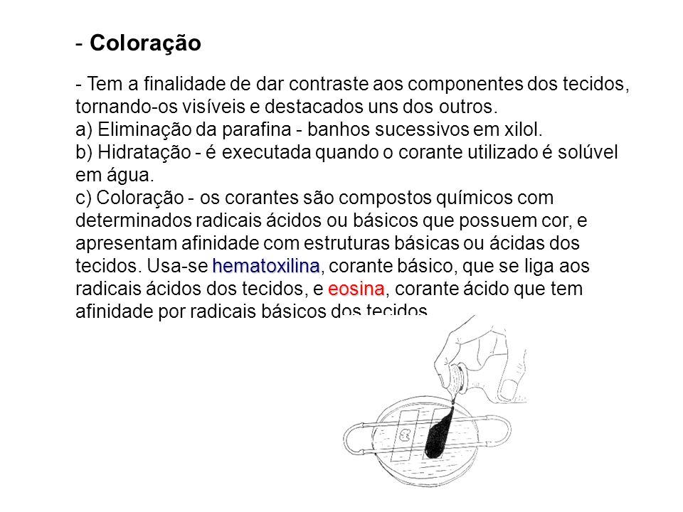 - Coloração hematoxilina eosina - Tem a finalidade de dar contraste aos componentes dos tecidos, tornando-os visíveis e destacados uns dos outros. a)