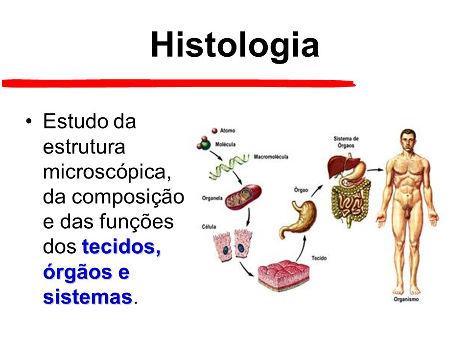 Histologia tecidos, órgãos e sistemasEstudo da estrutura microscópica, da composição e das funções dos tecidos, órgãos e sistemas.