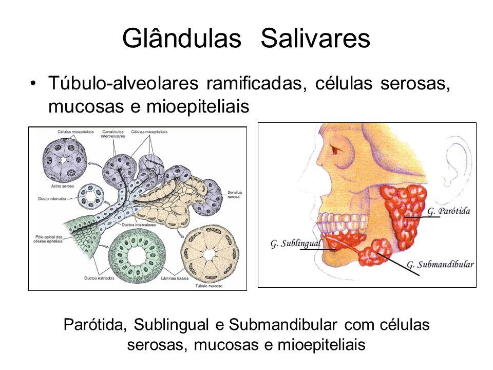 Glândulas Mucosas e serosas da língua