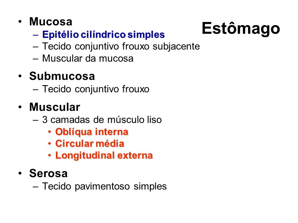 Epitélio cilíndrico simples