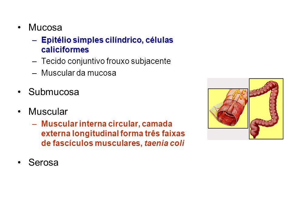 Fígado Maior massa de tecido glandular do organismo –Função endócrina e exócrina em uma única célula Quadrante superior direito, cavidade abdominal Cápsula de Glisson de tecido conjuntivo Cobertura serosa do peritônio visceral
