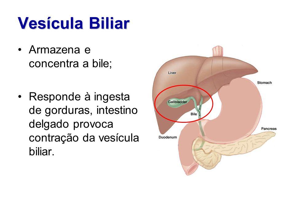 Vesícula Biliar Mucosa de epitélio cilíndrico simplesMucosa de epitélio cilíndrico simples Tecido conjuntivo frouxo Músculo lisoMúsculo liso Adventícia de fibras colágenas e elásticas