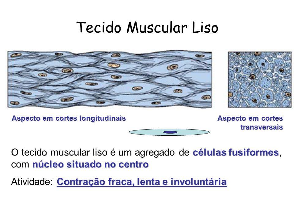 células fusiformes núcleo situado no centro O tecido muscular liso é um agregado de células fusiformes, com núcleo situado no centro Contração fraca,