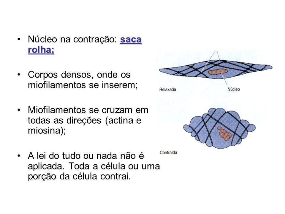 saca rolha;Núcleo na contração: saca rolha; Corpos densos, onde os miofilamentos se inserem; Miofilamentos se cruzam em todas as direções (actina e mi