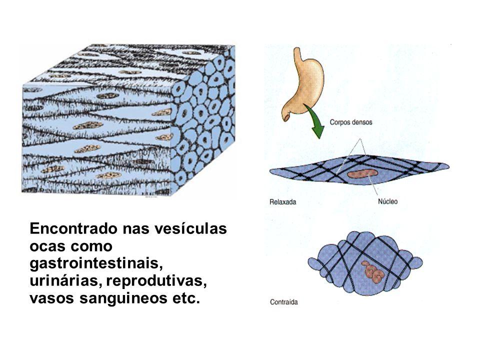 Encontrado nas vesículas ocas como gastrointestinais, urinárias, reprodutivas, vasos sanguineos etc.