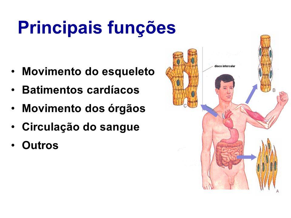 Principais funções Movimento do esqueleto Batimentos cardíacos Movimento dos órgãos Circulação do sangue Outros