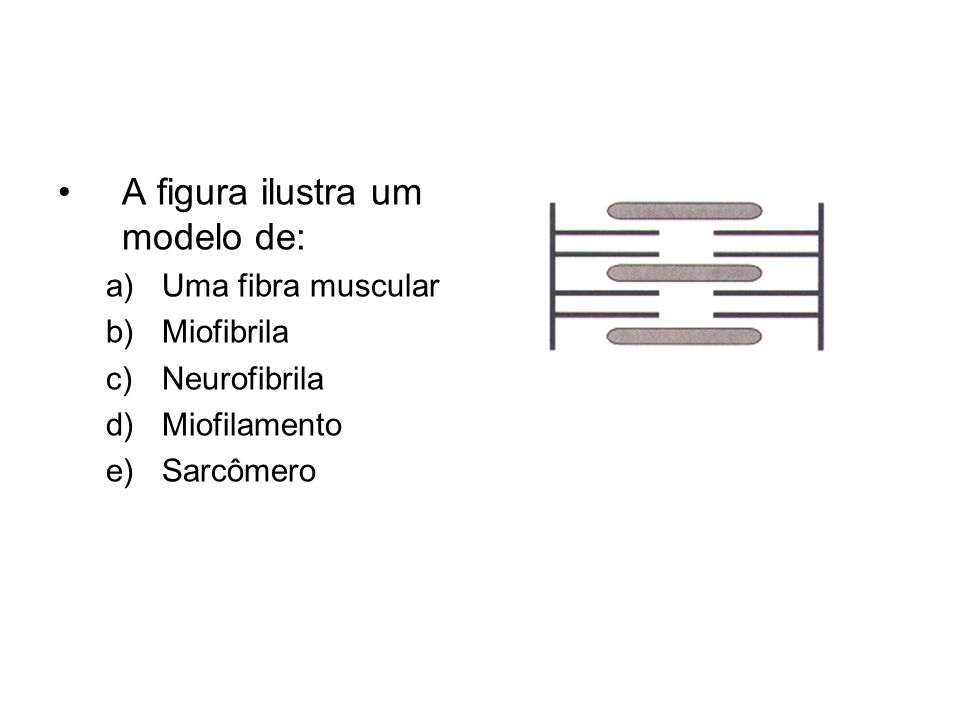 A figura ilustra um modelo de: a)Uma fibra muscular b)Miofibrila c)Neurofibrila d)Miofilamento e)Sarcômero