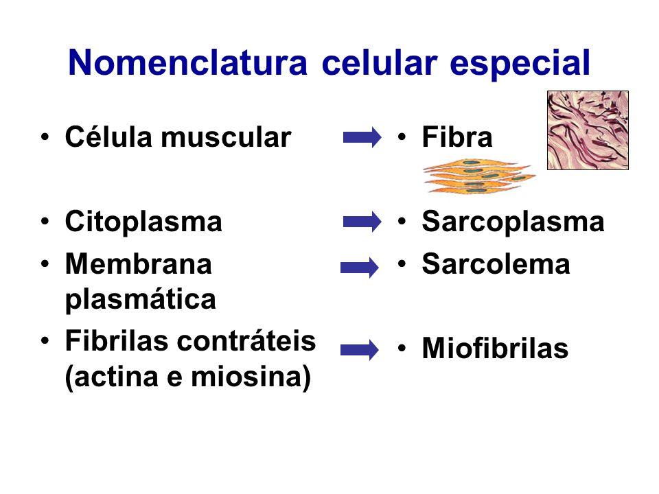 Nomenclatura celular especial Célula muscular Citoplasma Membrana plasmática Fibrilas contráteis (actina e miosina) Fibra Sarcoplasma Sarcolema Miofib