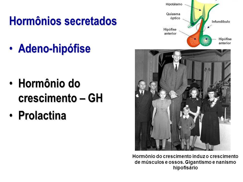 Hormônios secretados Hipotálamo Quiasma óptico Infundíbulo Hipófise anterior Adeno-hipófise Adeno-hipófise Hormônio do crescimento – GH Hormônio do cr