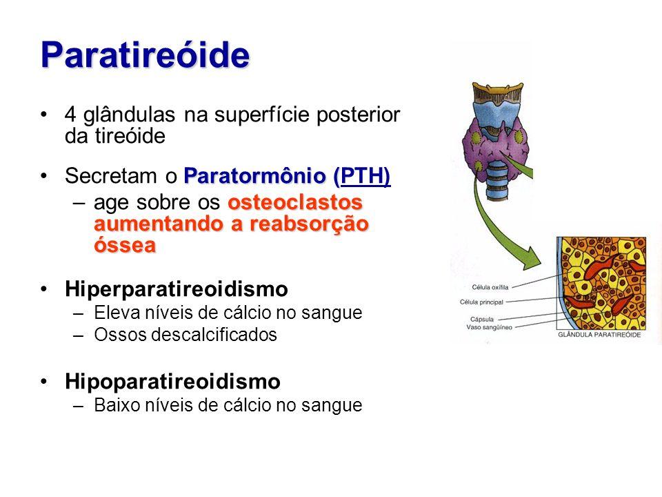 Paratireóide 4 glândulas na superfície posterior da tireóide Paratormônio (Secretam o Paratormônio (PTH) osteoclastos aumentando a reabsorção óssea –a