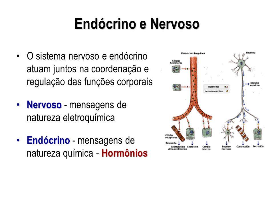 Endócrino e Nervoso O sistema nervoso e endócrino atuam juntos na coordenação e regulação das funções corporais Nervoso Nervoso - mensagens de naturez