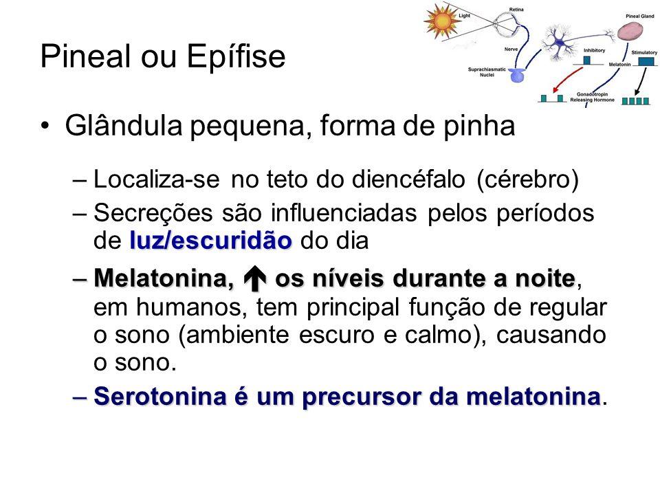 Pineal ou Epífise Glândula pequena, forma de pinha –Localiza-se no teto do diencéfalo (cérebro) luz/escuridão –Secreções são influenciadas pelos perío