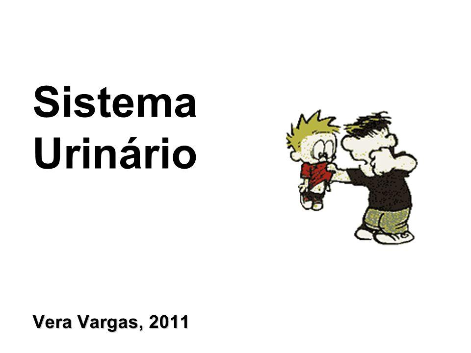 Vera Vargas, 2011 Sistema Urinário