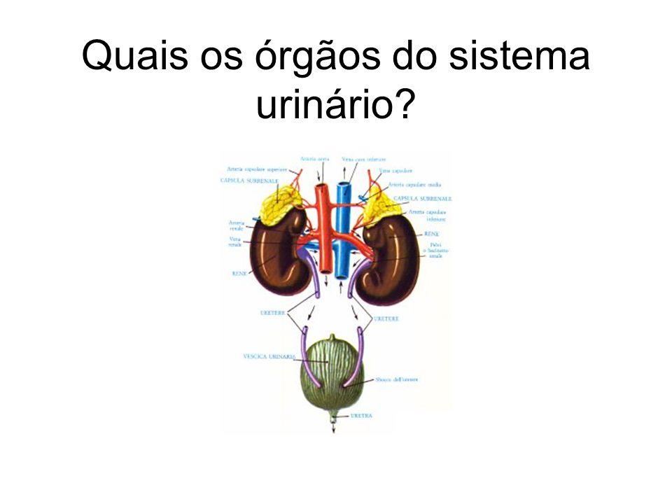 Quais os órgãos do sistema urinário?