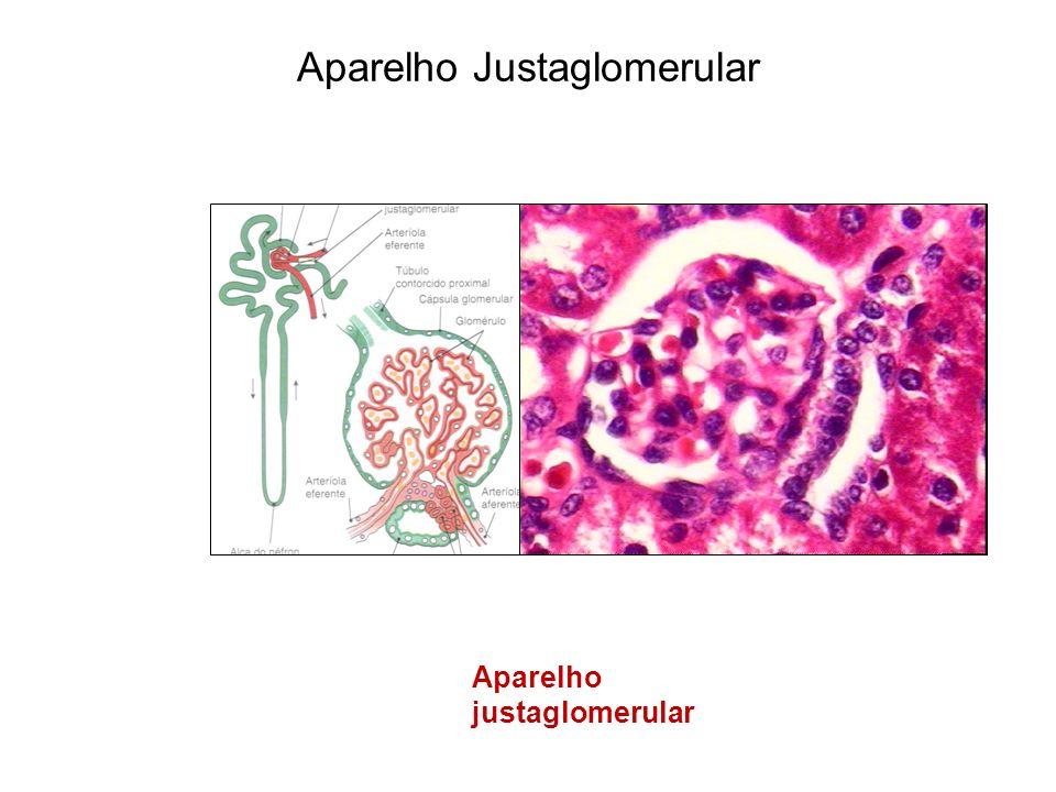 Aparelho justaglomerular Aparelho Justaglomerular