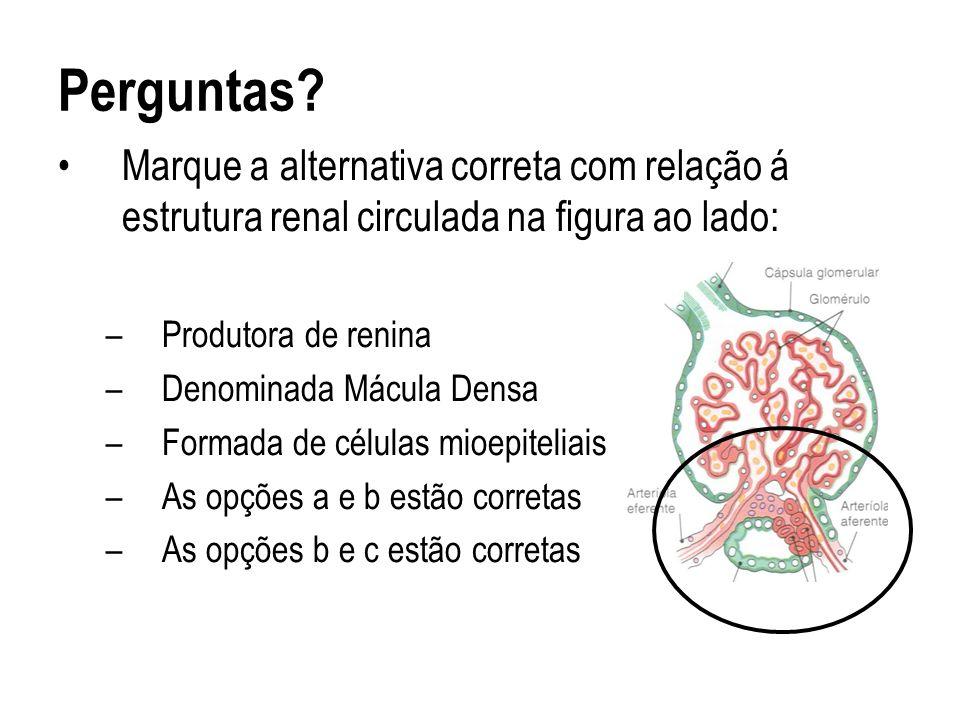 Perguntas? Marque a alternativa correta com relação á estrutura renal circulada na figura ao lado: –Produtora de renina –Denominada Mácula Densa –Form