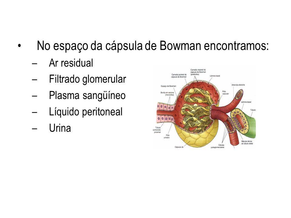 No espaço da cápsula de Bowman encontramos: –Ar residual –Filtrado glomerular –Plasma sangüíneo –Líquido peritoneal –Urina