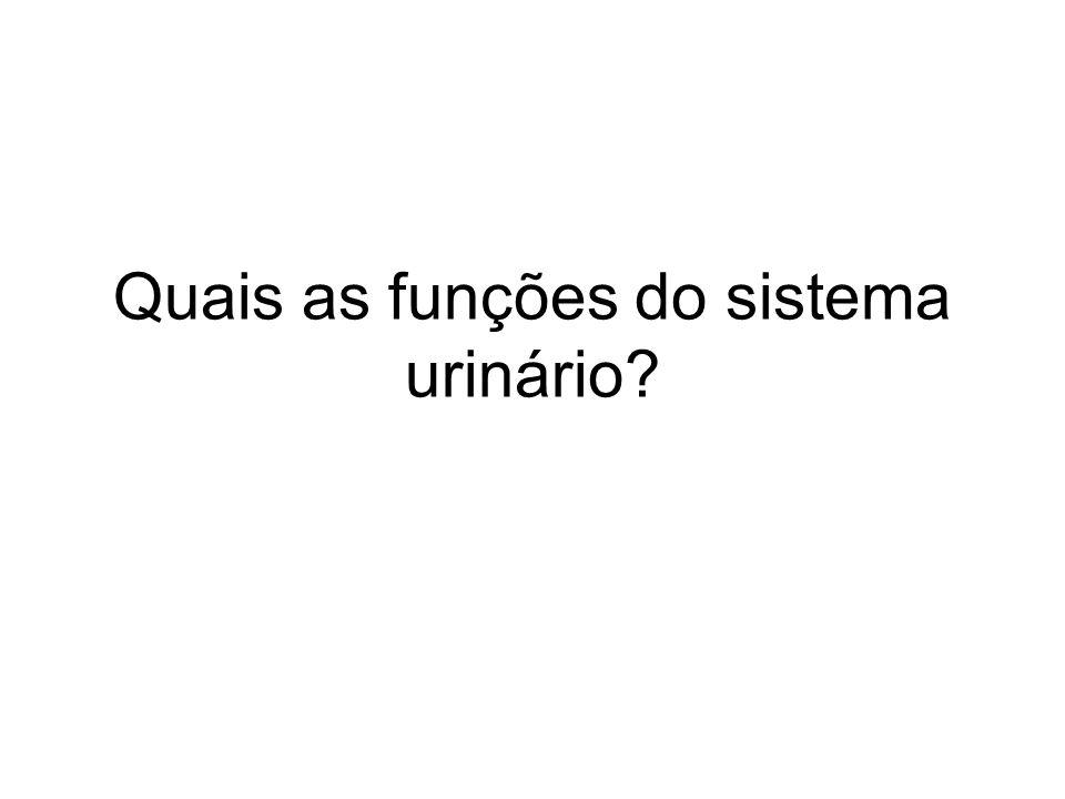 Quais as funções do sistema urinário?