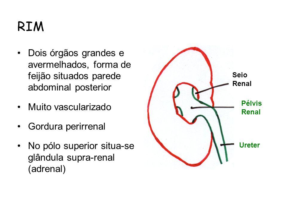 RIM Dois órgãos grandes e avermelhados, forma de feijão situados parede abdominal posterior Muito vascularizado Gordura perirrenal No pólo superior si