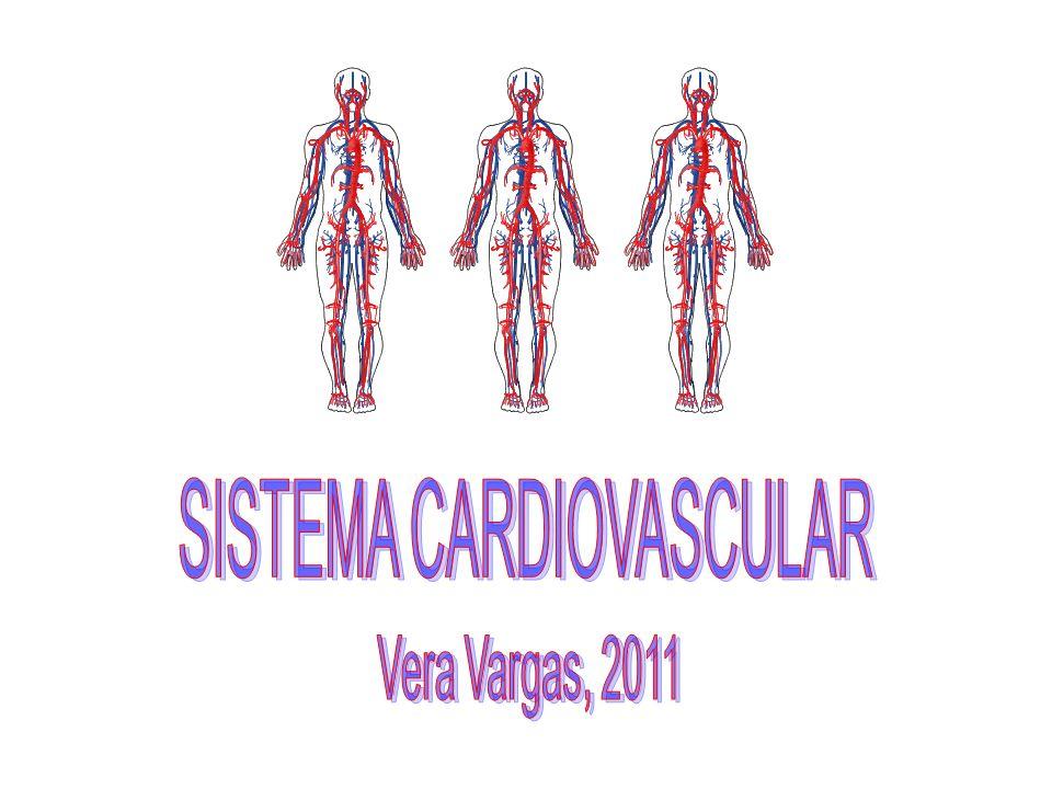 Constituída por uma membrana de endocárdio e tecido conjuntivo denso.