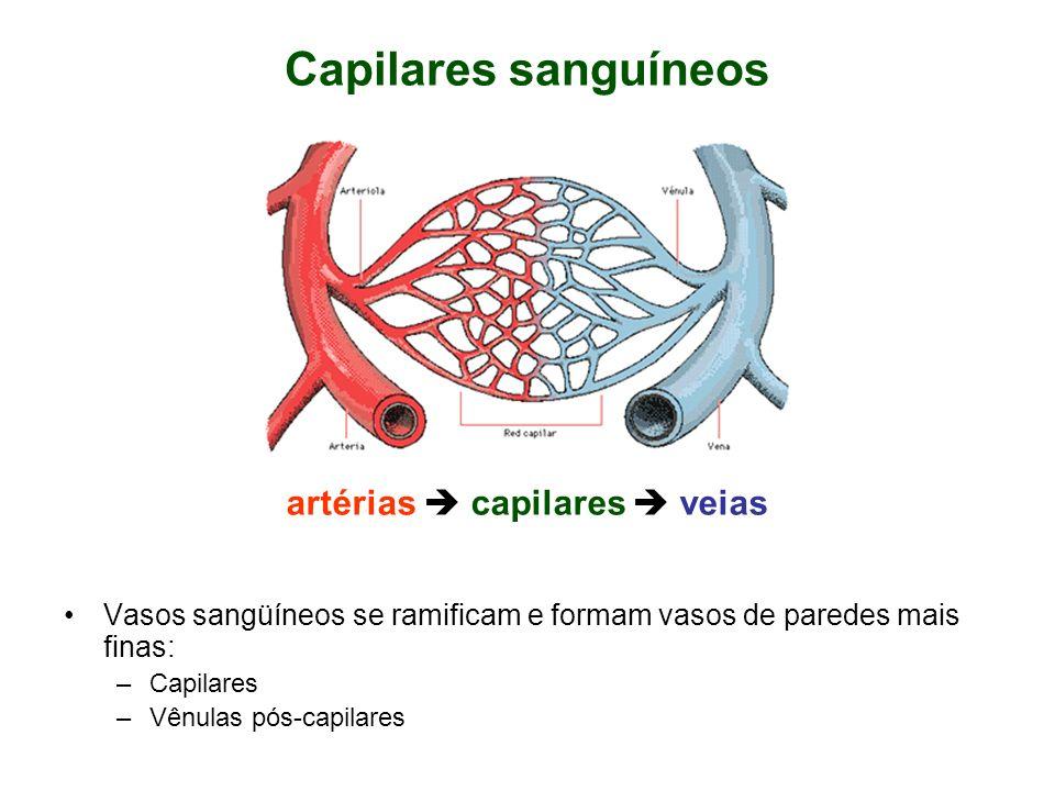 Capilares sanguíneos Vasos sangüíneos se ramificam e formam vasos de paredes mais finas: –Capilares –Vênulas pós-capilares artérias capilares veias