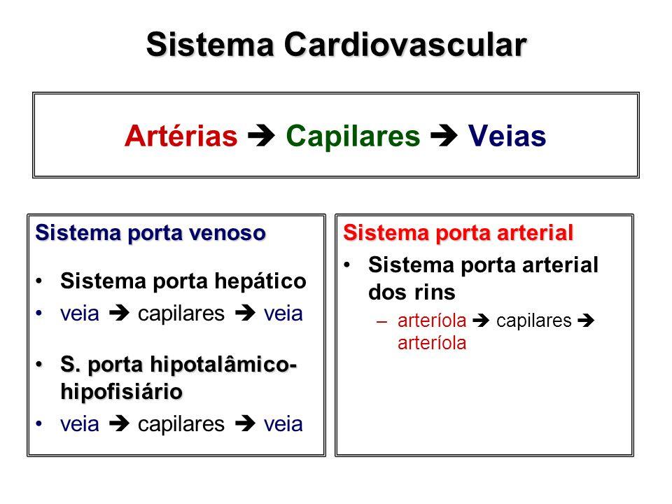 Artérias Capilares Veias Sistema porta venoso Sistema porta hepático veia capilares veia S. porta hipotalâmico- hipofisiárioS. porta hipotalâmico- hip