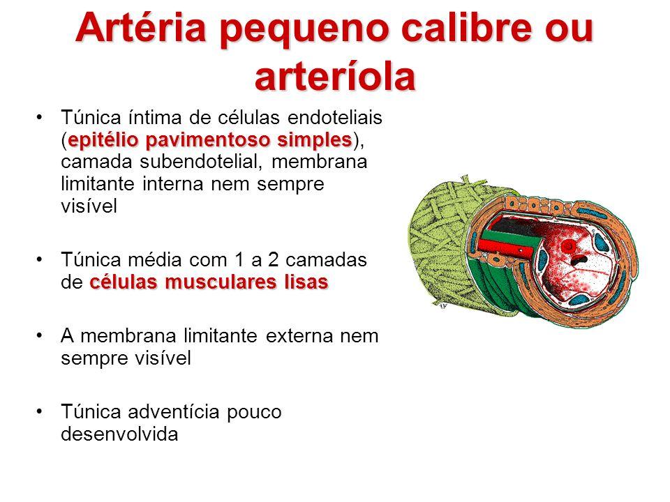 Artéria pequeno calibre ou arteríola epitélio pavimentoso simplesTúnica íntima de células endoteliais (epitélio pavimentoso simples), camada subendote